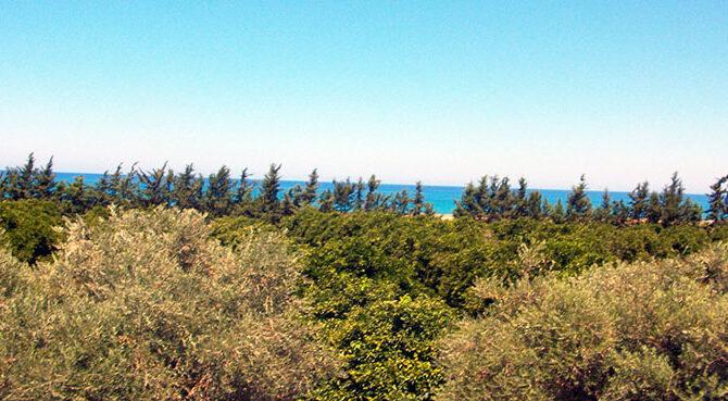 Продажа недвижимости в комплексе Polis Beach Villas Кипр